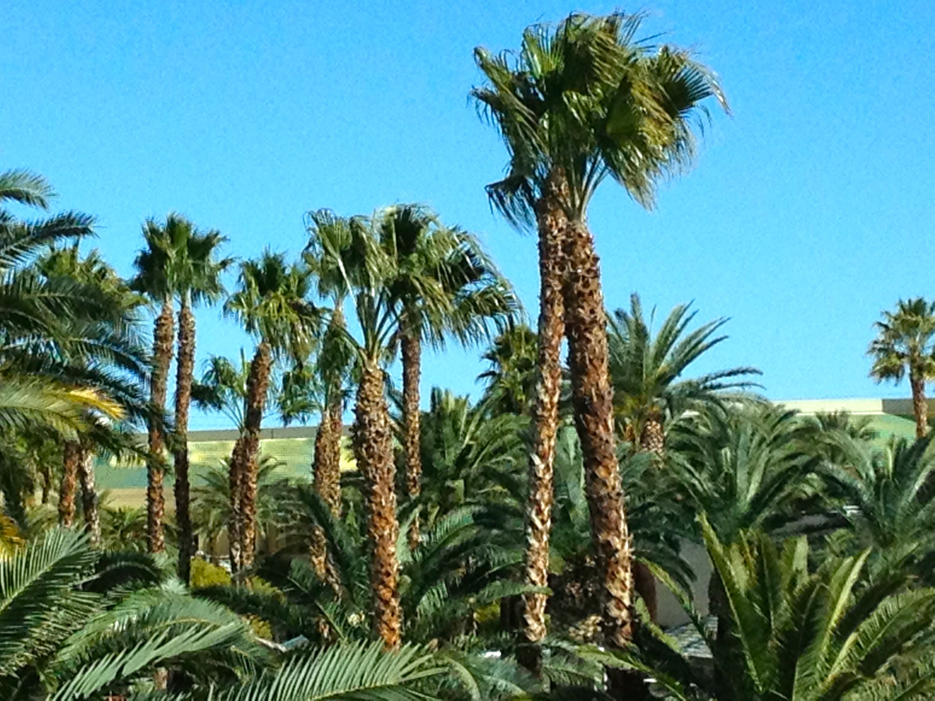 Travel Ahh….Palm Trees   Travel Oops