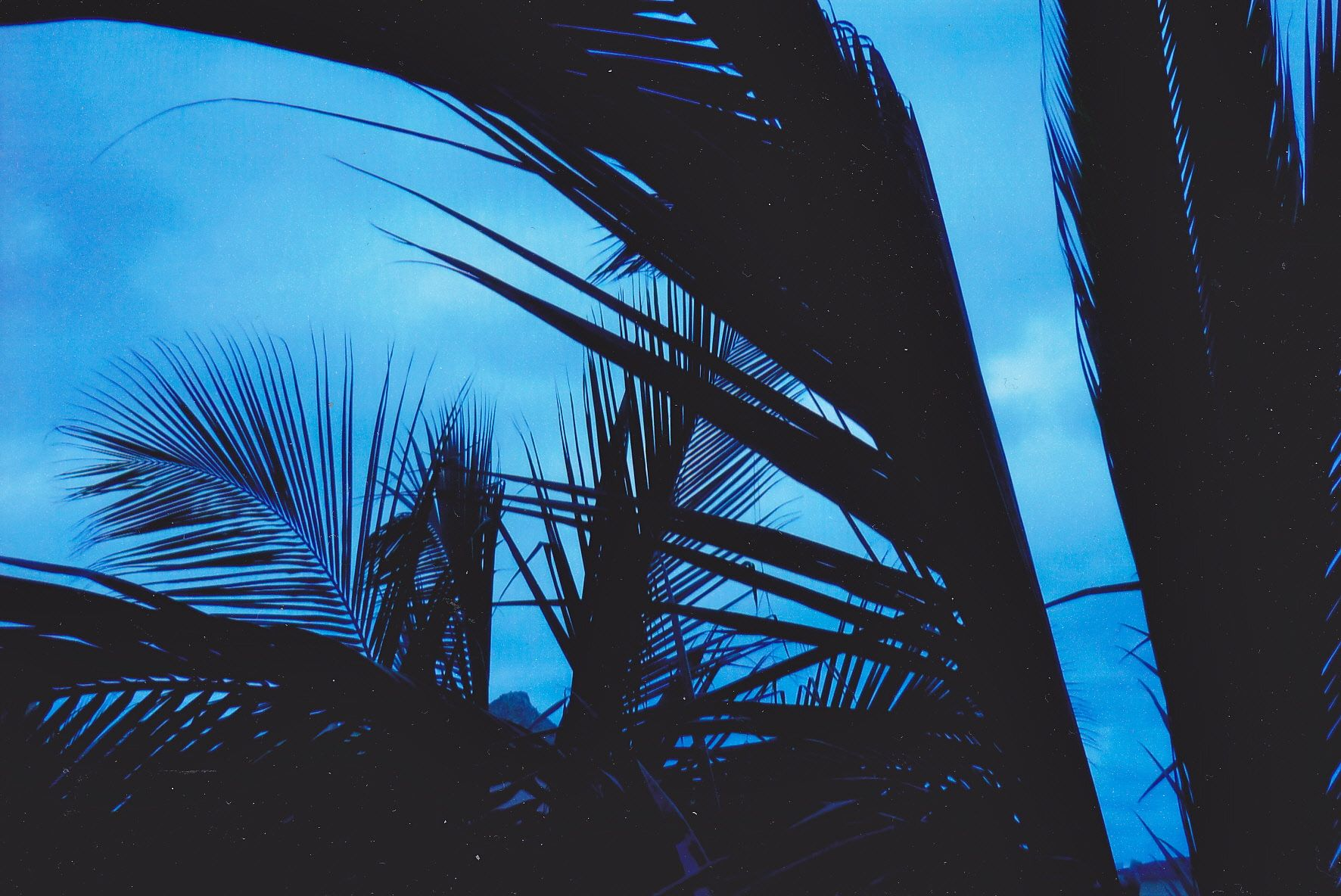 sillouette-palm-trees-in-mexico.jpg