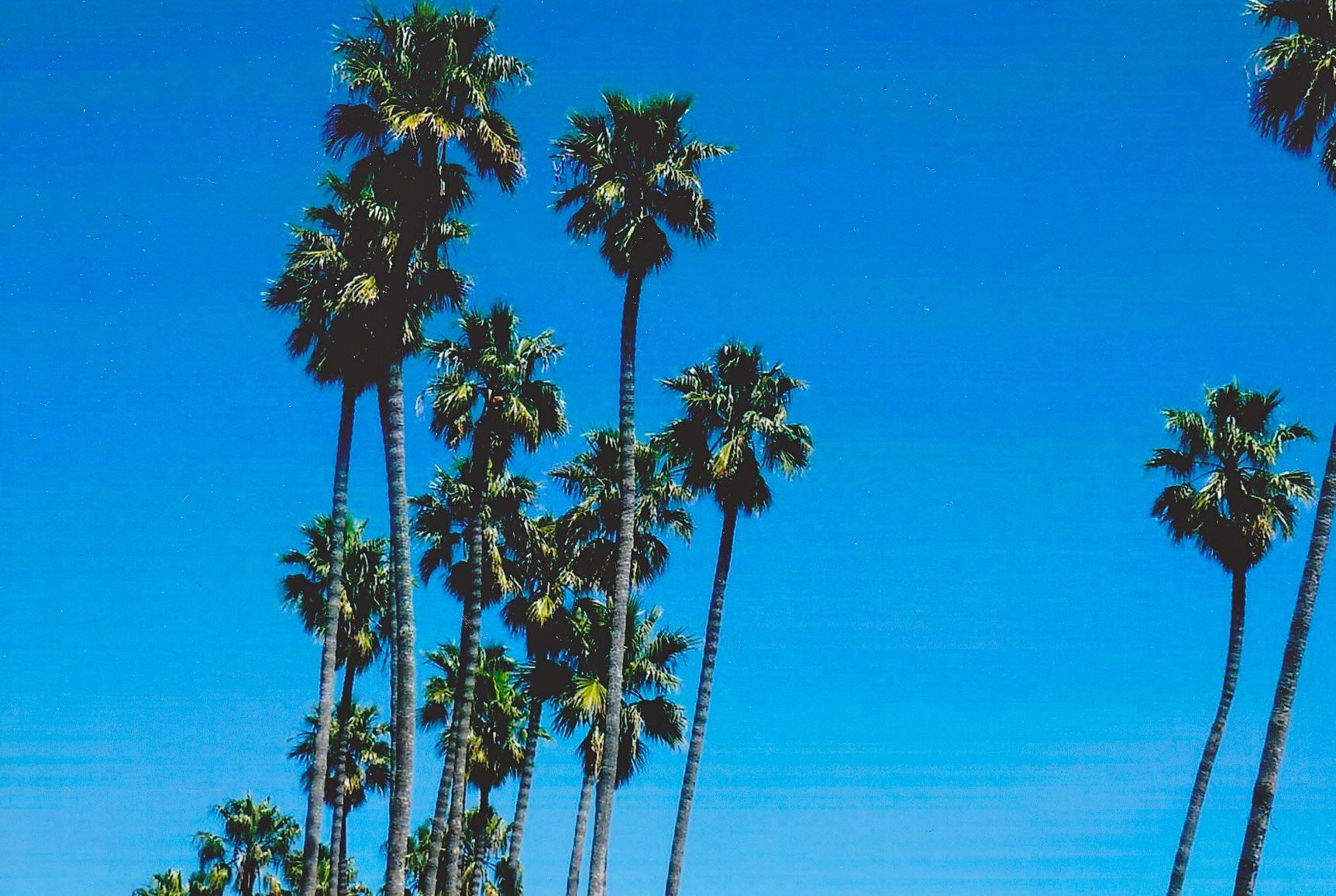 Travel AhhPalm Trees