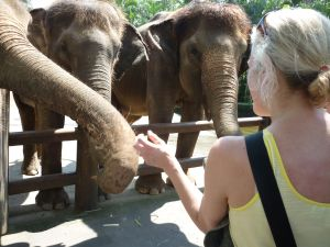 Here I am feeding and bonding with elephants in Bali.