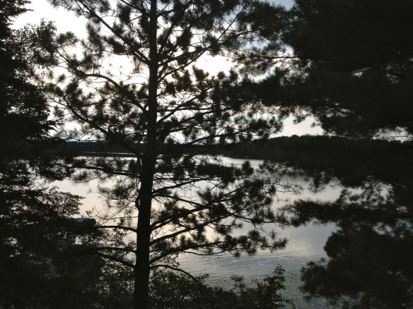 A pine tree hides Lake Minerva in Danbury, Wisconsin.