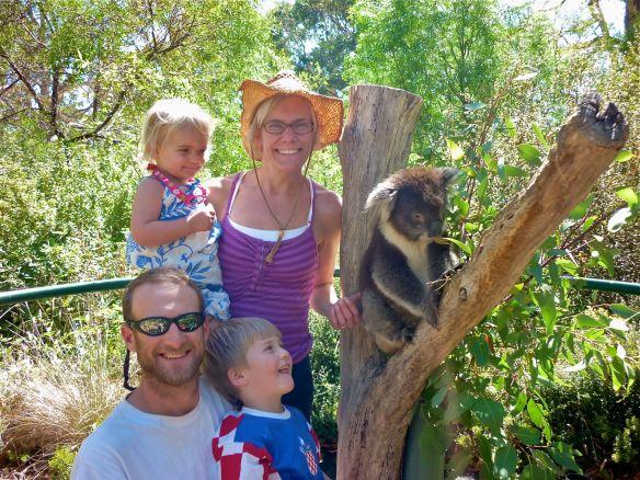 koala and family