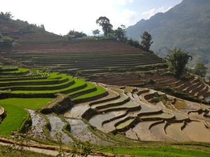 One view of the stunning rice terraces around Sapa, Vietnam