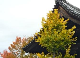 Kyoto tufts among trees